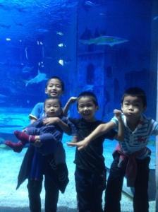 中国の水族館。入場料は120元(今の為替だと日本円で約2400円と高め)。身長120センチを区切りに設定している施設が多く、120センチ以上は大人と同じで以下は無料だそうです。